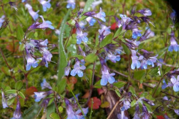 meadowflowers-905A1B65F77-8B15-070C-7665-A7C1F1BF3FCE.jpg