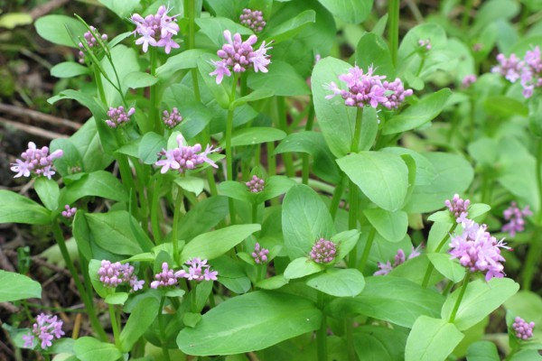 meadowflowers-916930244E7-0B8E-55E2-5B1B-81C1096C0B2C.jpg