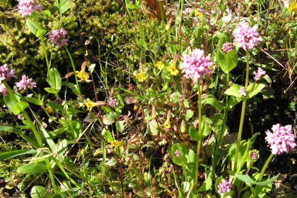 meadowflowers-9182EE0DEB0-EAF2-DE59-651C-B389A7FCD901.jpg