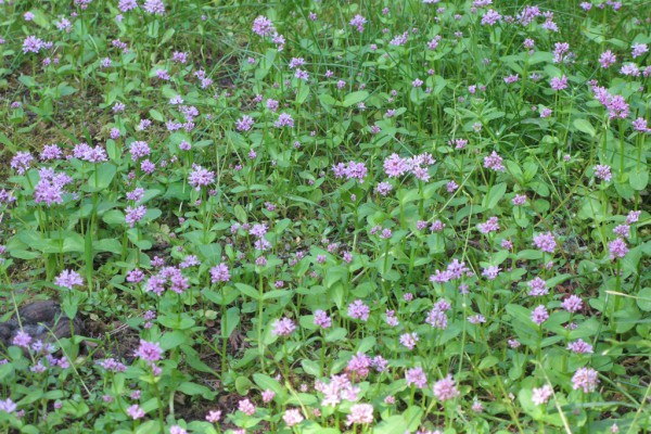 meadowflowers-9257E3B379A-EA0E-1D49-2B8D-E94FE91C8ECB.jpg