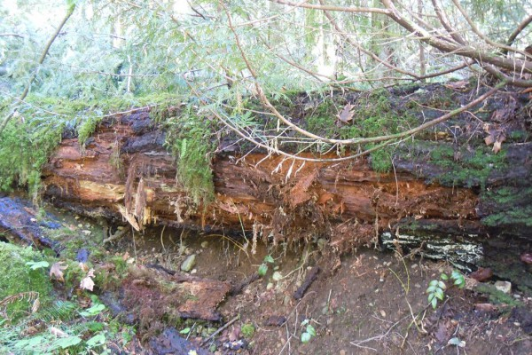 wood-west-32939C84D0C-7985-D78F-9F2F-D5B40514048B.jpg