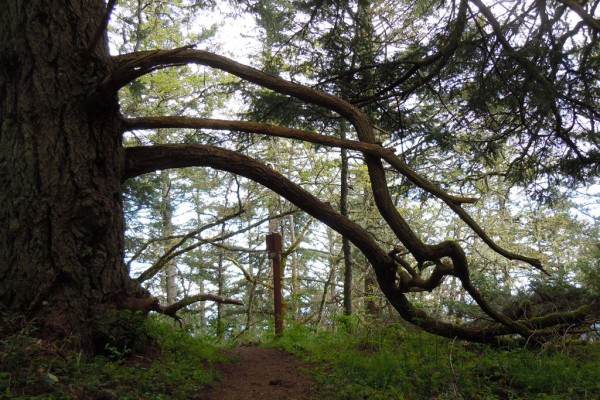 wood-fern-4148DE73789-CDAD-8419-6ED8-A8E62C7B3E47.jpg