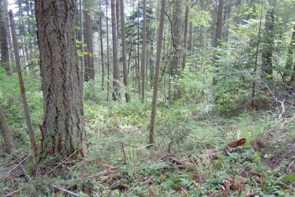wood-fern-439248065D9-CB3D-5951-8AD2-EC275469D246.jpg