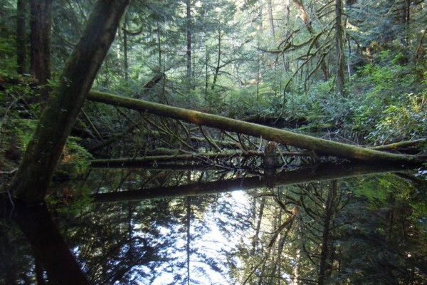 wood-fern-4531F94A4F7-9EA1-9AE9-5CD0-7AF9E42C1732.jpg