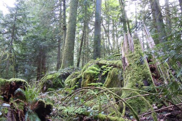 wood-fern-4372772669F-6BFA-29AE-3885-AA03D76E4064.jpg