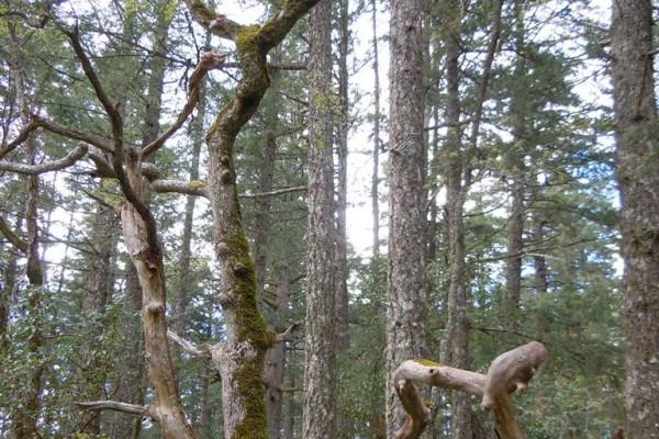 wood-fern-4477547C607-515A-A9B6-7A94-2C7652950CA4.jpg