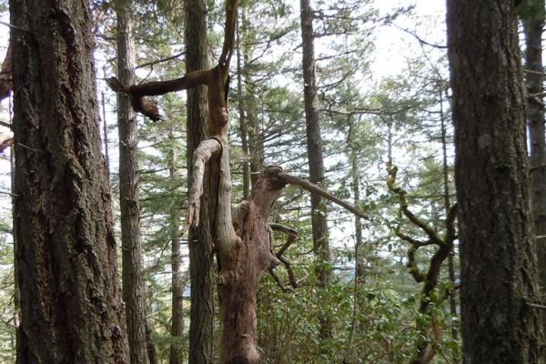 wood-fern-553171D0735-5037-FD36-BF09-711C2279B3BF.jpg