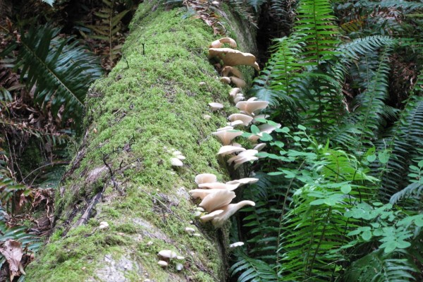 fungi-9059AAFFF7D-6A8E-0D7F-6ED1-50BC52B22A00.jpg