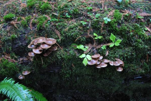 fungi-907CCCBD896-ED4F-F52E-5BC0-A20297E625DA.jpg