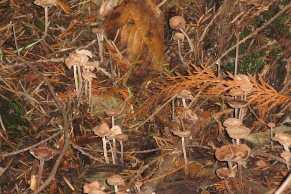 fungi-9154F5B214A-4E57-4023-6260-CAE47467AC44.jpg
