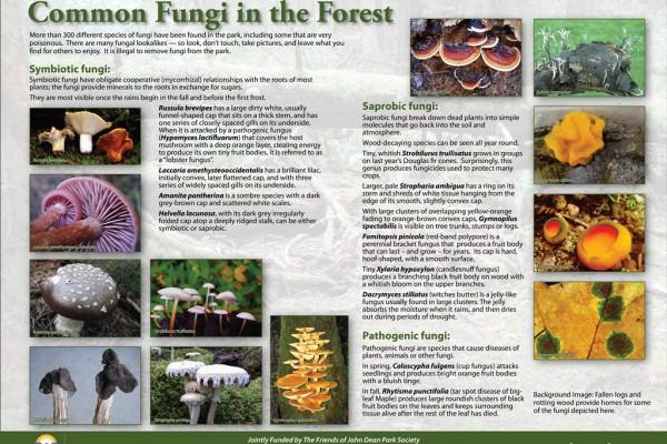 fungisign1024x75053F3B89F-E604-6146-FF29-1491F4DE5236.jpg