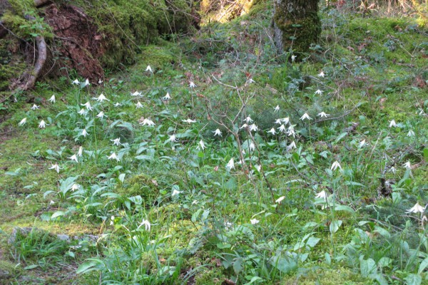 woodflowers-9067715A2CA-3FC4-8573-D5B0-9757983923BD.jpg
