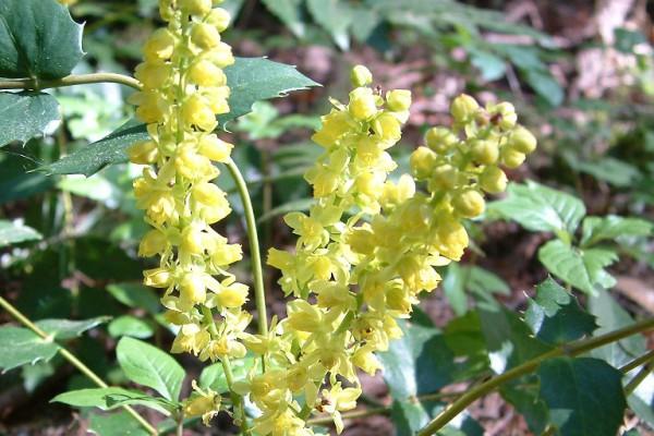 woodflowers-910C0E551DA-AD95-4A01-8E0F-B328F672EBDA.jpg
