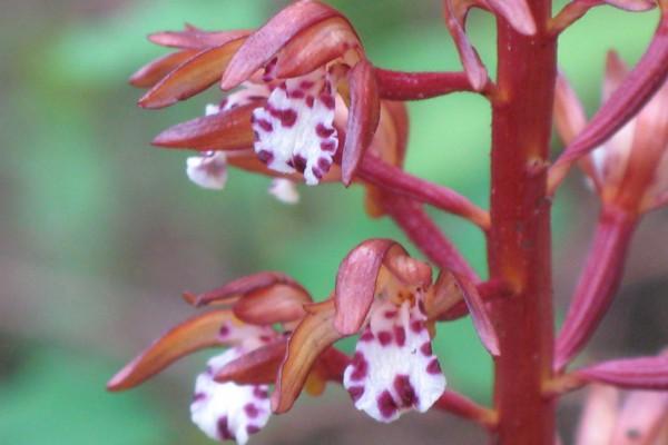 woodflowers-9244DE5E2B4-1D7F-9611-C9AF-57F2DBC22E6A.jpg