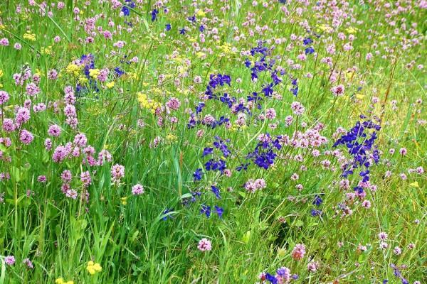 meadowflowers-909D0FA1F62-6FE7-614F-37AE-98E009493ABE.jpg