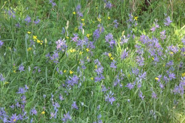 meadowflowers-928CEC040B2-196D-D8BD-3623-C28024D8077B.jpg