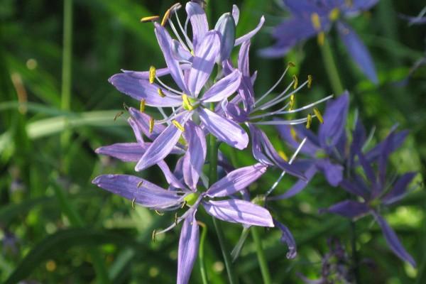 meadowflowers-9290636F816-6393-30C0-E0AF-9681D119B11A.jpg