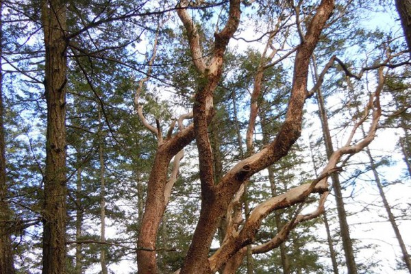wood-fern-441A0975106-629F-A211-8C6E-DE94A0FC63EB.jpg