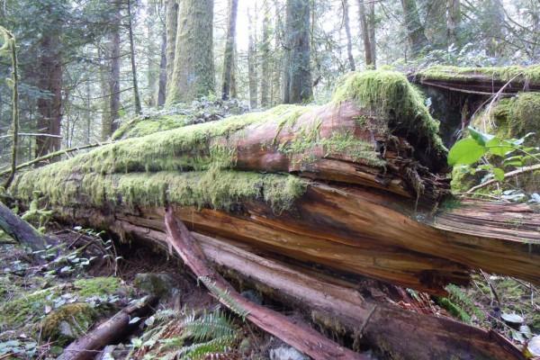 wood-fern-445B5F3ECA3-6B6B-3799-9B47-6D9D32D44BEF.jpg