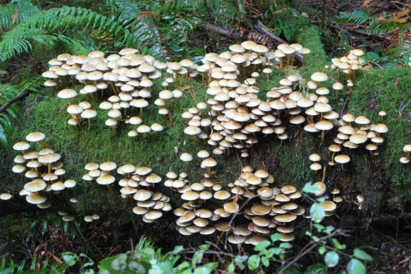 fungi-9175575B7B0-DE36-033D-F019-F907701DF1BE.jpg