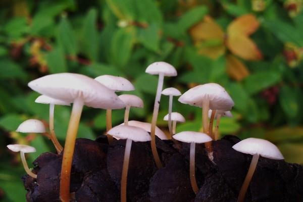 fungi-91919BD73EA-AD42-998D-6136-144E0E0F7F1E.jpg