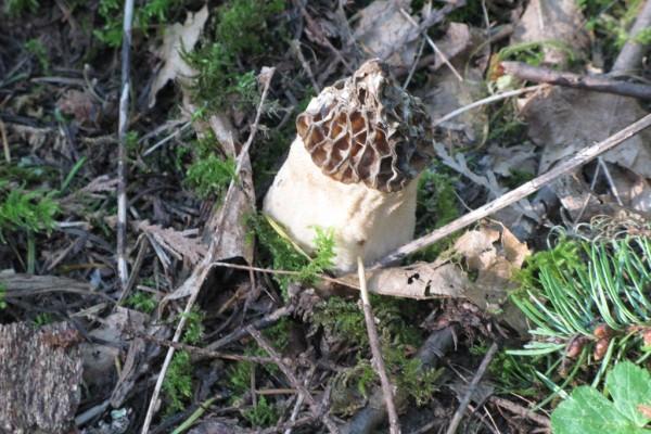 fungi-9314A5CEE44-EB02-EC36-F27A-50518E0EC435.jpg