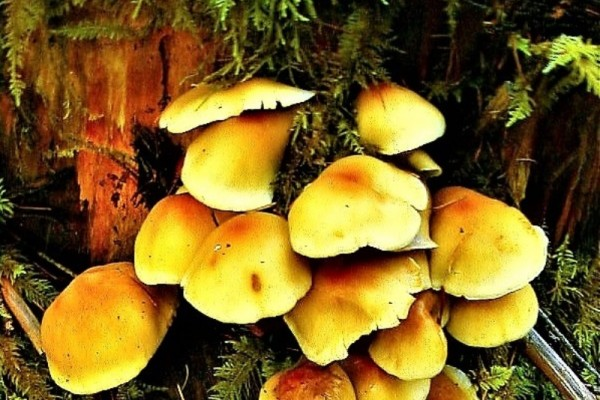 fungi-936AB8309AA-7CEE-154F-990F-A404DC9E32B0.jpg