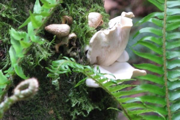 fungi-9378526851C-EA6D-2513-420A-5B8D2D134C7A.jpg