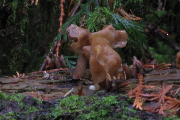 fungi-9384210EED1-3EA4-F465-B55B-B4EB1C854616.jpg